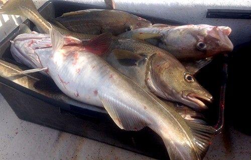 A Fisk1